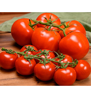 HOLLAND CHEERY TOMATO (440-500G)