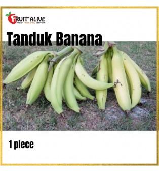 TANDUK BANANA (1 PCS) MALAYSIA