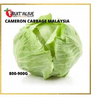CAMERON CABBAGE MALAYSIA (800-900G)