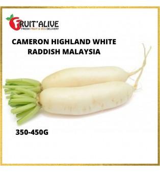 CAMERON HIGHLAND WHITE RADDISH MALAYSIA (350-450G)