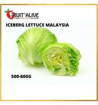 ICEBERG LETTUCE MALAYSIA (500-600G)