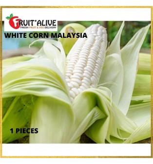 CAMERON HIGHLAND WHITE CORN MALAYSIA